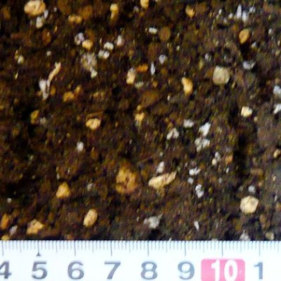 画像2: そのまま使える「育苗ポット培土」【400L(40Lx10袋)】(プロ農家用)