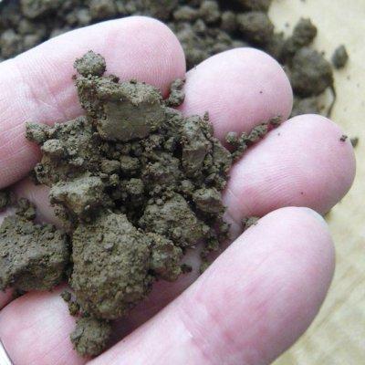 画像3: 水生植物の栽培に「荒木田土-あらきだつち(田土)」【大袋・約18L・約15kg】サクラソウ、キク、ボタンなどの鉢物栽培にも最適