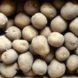 画像3: (馬鈴薯)種ジャガイモ【トウヤ】【1kg】大粒で早生、育てやすい品種 (3)