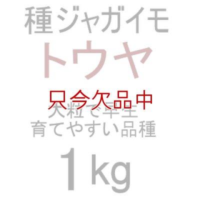 画像2: [2017年は完売終了](馬鈴薯)種ジャガイモ【トウヤ】【1kg】大粒で早生、育てやすい品種