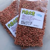 六条大麦|大麦種子|家庭園芸・実験栽培用【100g】【送料無料】【DM便配送につき時間指定不可】