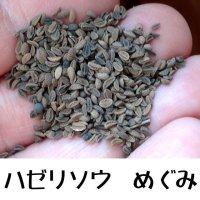 【景観用】ハゼリソウ めぐみ【1kg/300平方m分】カネコ種苗ワイルドフラワー