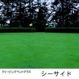 クリーピング ベントグラス シーサイド【11.25kg】耐塩性、耐冠水性に優れるゴルフ場用の西洋芝種子【送料無料】