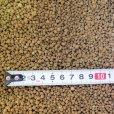 画像2: インドネシア産バットグアノ【粒(つぶ)状】【5kg】 (2)