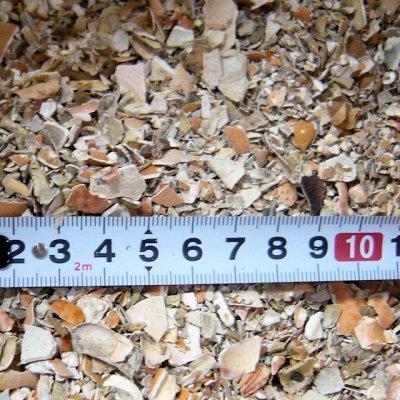 画像4: カナダ産・蟹殻(カニガラ)【2.5kg】「植物保護・肥効・土壌改良に最適」