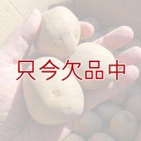 [完売](馬鈴薯)種ジャガイモ【男爵薯】【1kg】ホクホクで美味しいジャガイモの定番