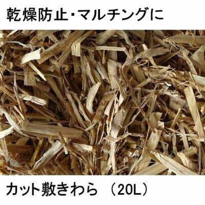 画像1: 園芸用【高品質】カット敷きわら【20L】乾燥防止・マルチングに(1.5平方メートル用)
