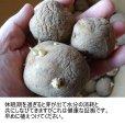 (馬鈴薯)種ジャガイモ【男爵薯】
