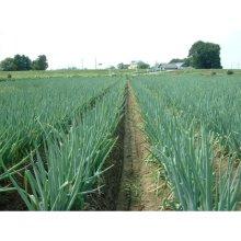 詳細写真2: ねぎ・タマネギに最適【粒状】高度化成肥料(N10-P12-K8)ジシアンジアミドと有機の効果で長く効く【2kg】