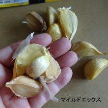 詳細写真2: マイルドエックス|種子用大蒜|臭いの残らない国産ニンニク【100g】