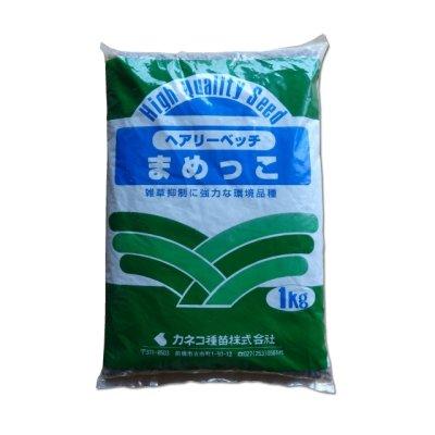 画像3: 【緑肥種子】ヘアリーベッチまめっこ|マメ科|窒素固定|硬盤破砕|敷藁|防風|刈り取り不要【1kg】カネコ種苗製