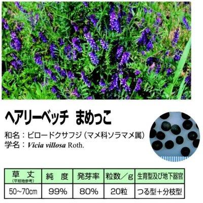 画像2: 【緑肥種子】ヘアリーベッチまめっこ|マメ科|窒素固定|硬盤破砕|敷藁|防風|刈り取り不要【1kg】カネコ種苗製