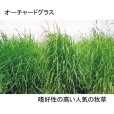 画像2: 【牧草種子】オーチャードグラス|ポトマック(早生種)|採草向き|耐寒性。耐暑性あり【1kg】嗜好性の高い人気の多年生牧草|カネコ種苗製 (2)