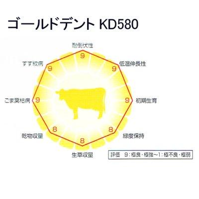 ゴールドデント|KD580