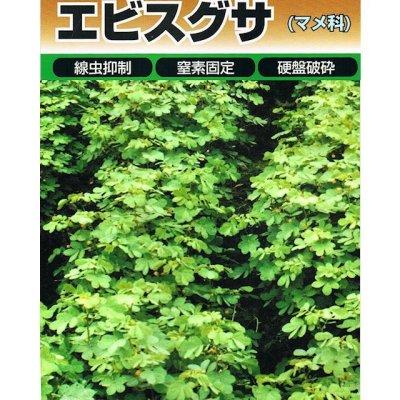 ・エビスグサは春播き〜夏播きの緑肥です。