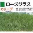 画像1: 【牧草種子】ローズグラス|カリーデ|4倍体|晩生種|暖地型牧草【1kg/500〜200平方m分】カネコ種苗製 (1)