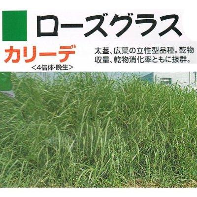 画像1: 【牧草種子】ローズグラス|カリーデ|4倍体|晩生種|暖地型牧草【1kg/500〜200平方m分】カネコ種苗製
