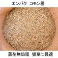 【猫草用種子】えん麦|薬剤無処理品