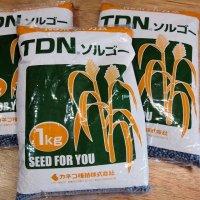 【飼料作物】TDNソルゴー【1kg】早生種|カネコ種苗製