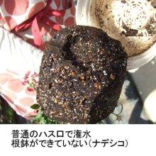 詳細写真2: ロッキィFG|根に酸素を届ける空気潅水シャワーヘッド【送料無料】