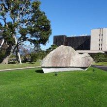 詳細写真1: 西洋芝のタネ J.ガーデングラス(芝生の種)【1L/約20平方メートル分】