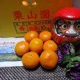 柑橘類の栽培現場では海藻資材は当たり前。