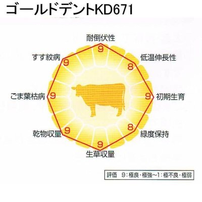 画像4: 【牧草種子】ゴールドデント|KD671 [RM117] 3500粒/約500平方m分|TDN収量に優れるKD670の後継品種|カネコ種苗製
