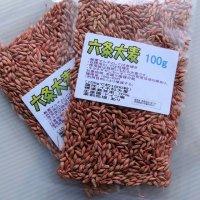 六条大麦|大麦種子|家庭園芸・実験栽培用【100g】【送料無料】【時間指定不可】
