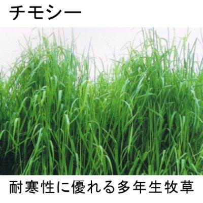 画像3: チモシーのタネ 生牧草・ペット・実験栽培用【100g】【送料無料】【時間指定不可】