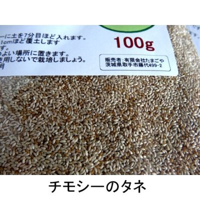 画像2: チモシーのタネ 生牧草・ペット・実験栽培用【100g】【送料無料】【時間指定不可】