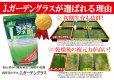 画像4: 西洋芝のタネ J.ガーデングラス(芝生の種)【1L/約20平方メートル分】 (4)