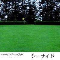 クリーピング ベントグラス シーサイド2【11.25kg】耐塩性、耐冠水性に優れるゴルフ場用の西洋芝種子【送料無料】