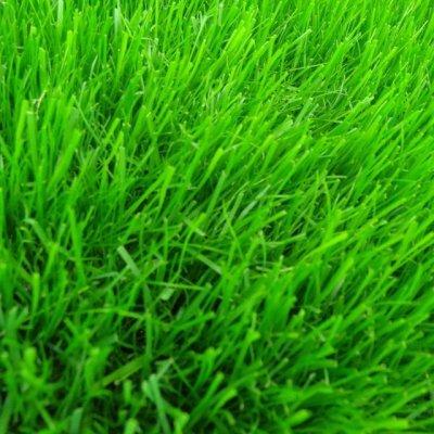 画像3: 西洋芝のタネ J.ガーデングラス(芝生の種)【1L/約20平方メートル分】