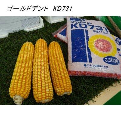 ゴールドデント KD731 [RM123]