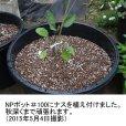 NPポット(100L)