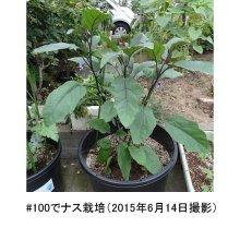 詳細写真1: 【大型鉢】NPポット(60L)-ブルーベリー、果樹に最適な大型コンテナ
