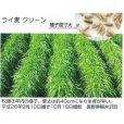 ライ麦|緑肥用クリーン