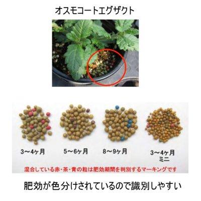 オスモコートエグザクト ミニ(16-8-11 / 3-4ヶ月)【10kg】