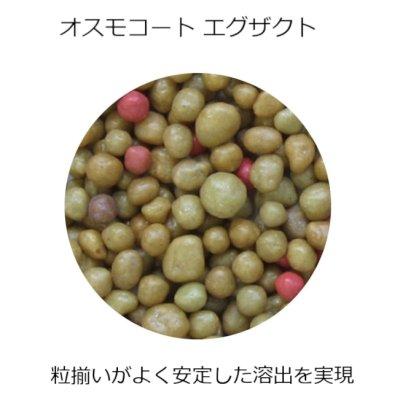 オスモコートエグザクト(11-11-18 / 5-6ヵ月)ハイK