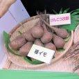 ナガイモ-ゲンコツ次郎)-カネコ種苗選抜-種長芋