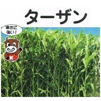 【飼料作物】ターザン【1kg】ソルガム類|ソルゴー型ソルゴー|晩生種|カネコ種苗製|2018年新品種