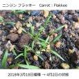 【有機種子】ニンジン フラッキー【大袋2dl/粒数目安:103467粒】Carrot : Flakkee
