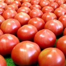 詳細写真1: [値下げ]トマトの土《甘くて、美味しいトマトづくり》家庭園芸用培養土【14L】
