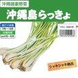 縄 島らっきょ【100g】沖縄健康野菜(栽培用種球