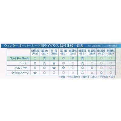 【新発売】【西洋芝種子】ペレニアルライグラス|ファイヤーボール【1kg入り】カネコ種苗製