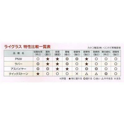 【西洋芝種子】ペレニアルライグラス|アスパイヤー【1kg入り】カネコ種苗製