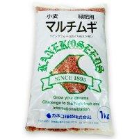 【緑肥用種子】マルチムギ|リビングマルチ用 小麦|遅枯れ品種|イネ科【1kg】カネコ種苗製