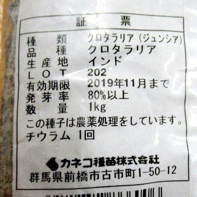 Crotalaria  クロタラリア