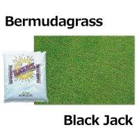 【暖地型芝草】バミューダグラス ブラックジャック【1kg】Bermudagrass Black Jack(ティフトン系)