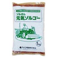 【飼料作物】元気ソルゴー【1kg】ソルガム類|スーダン型ソルゴー|早生種|カネコ種苗製